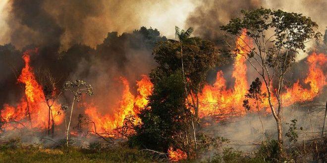 El humo de los incendios de la Amazonia cubriría Buenos Aires este fin de semana