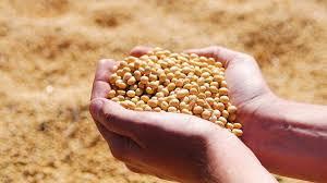Argentina cerró un acuerdo histórico para ingresar a China con harina de soja