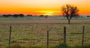 El sector agropecuario y sus desafíos