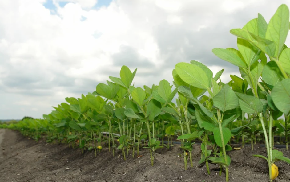 Buenas señales en el agro: crece el precio de la soja