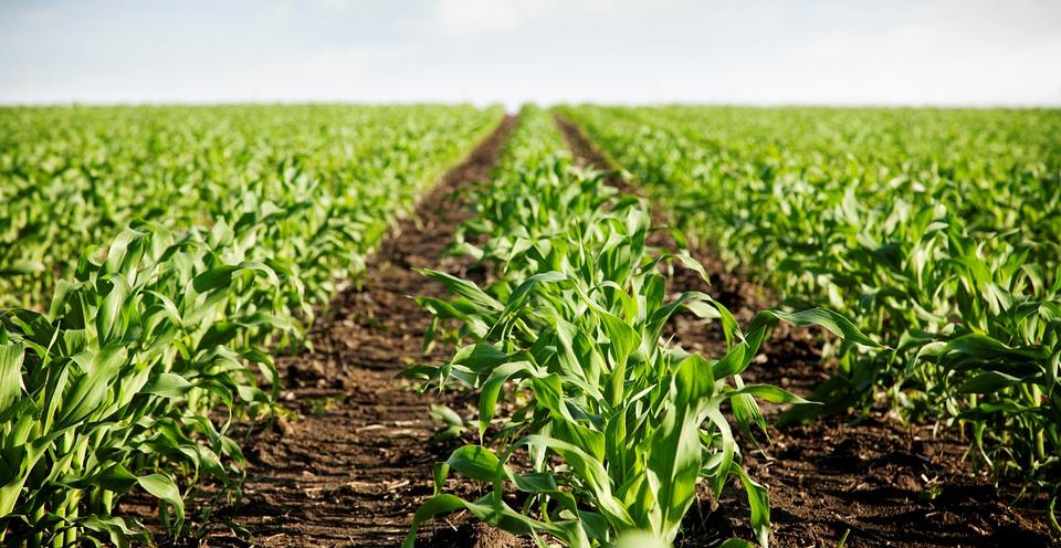 AGCO relanzó su visión para el sector agropecuario