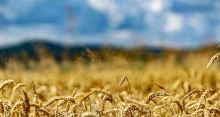 Siembra de Trigo: el clima puede alterar las expectativas en los rindes