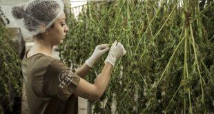 Gobierno argentino está próximo a reglamentar el autocultivo de cannabis