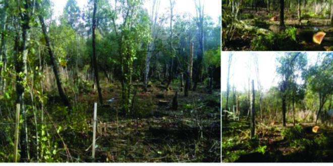 Usurpadores de una reserva forestal en El Bolsón venden por redes sociales las tierras tomadas