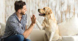 Como conseguir las mejores fotos de tu mascota
