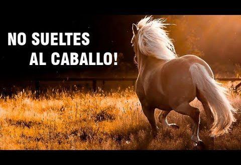 No sueltes al caballo